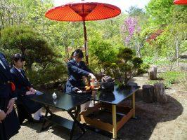 茶道部 春のお茶会の様子です